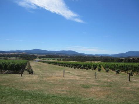 Domaine Chandon à Yarra Valley, à 90 km d'est de Melbourne. Pas le droit d'appeler ça du Champagne mais bon.