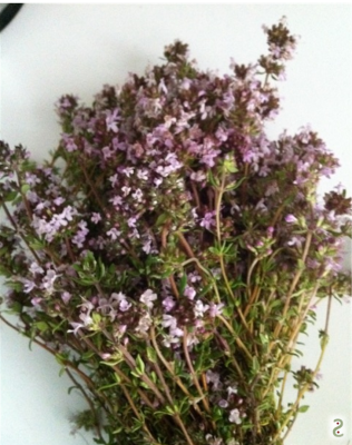Thyme in blossom http://wp.me/p3iY4S-gh