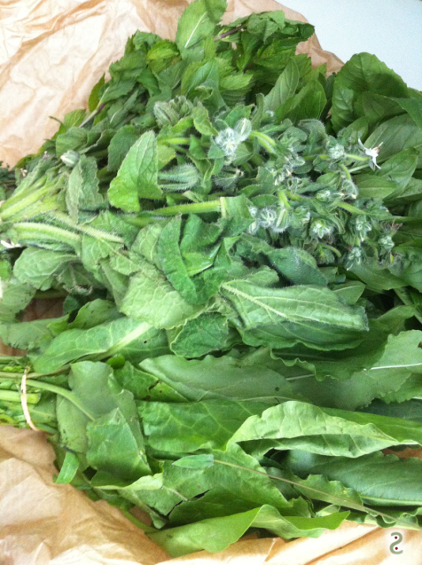 sorrel, mint and borage from the market