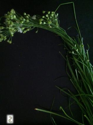Flowers +....