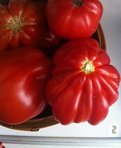 tomatoccino